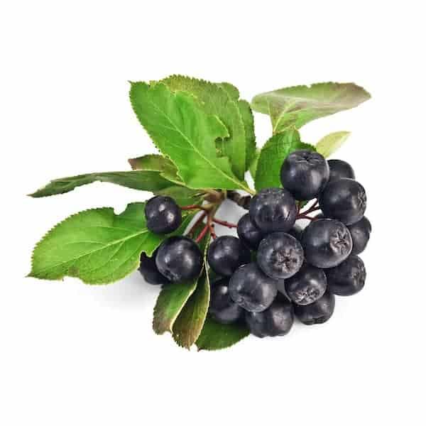 chokeberry cellulite