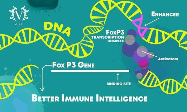 ibd foxp3 gene