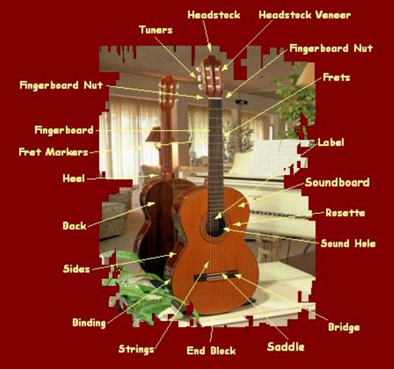 Anatomy of a Classical Guitar
