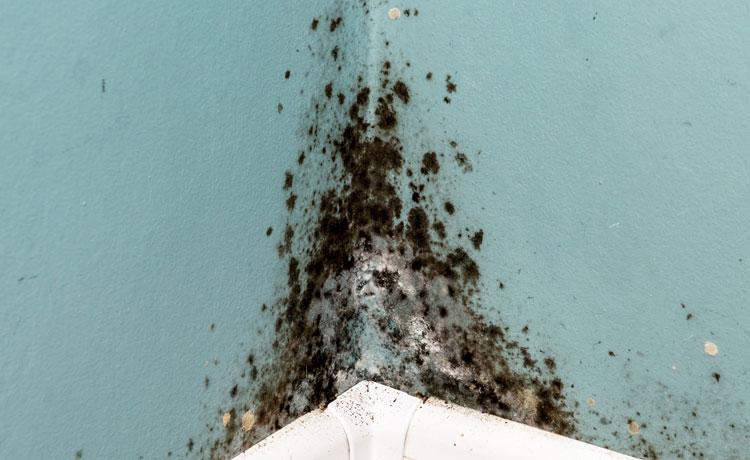 Brecs-gilbert-Mold-Cleanup