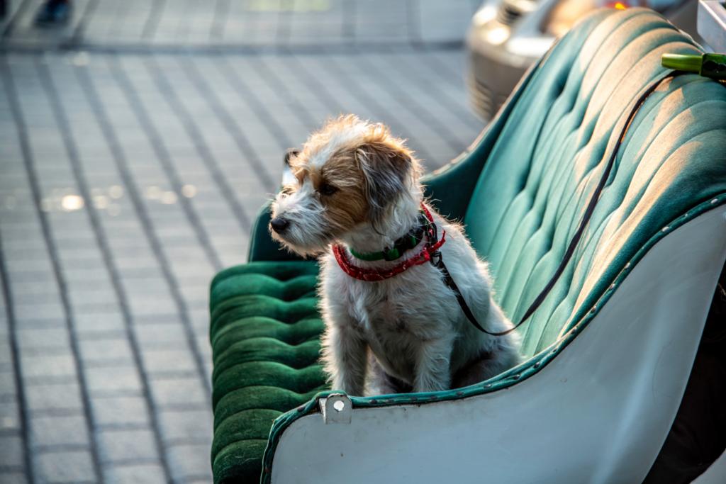 Chien assis sur un banc avec laisse