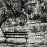 Black and White Bench at Pond