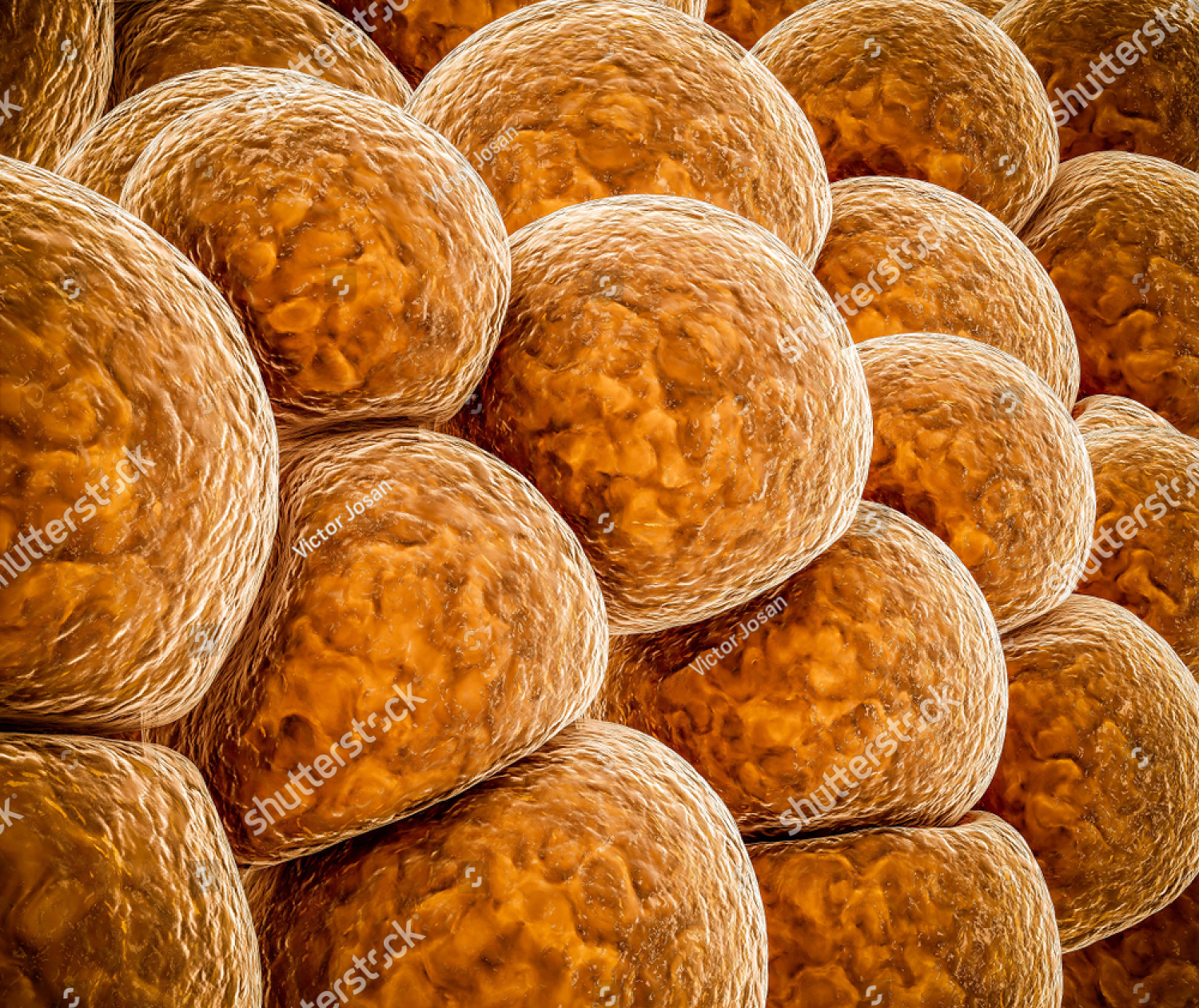 stock-photo–d-illustration-of-fat-cells-abstract-background-1152487757