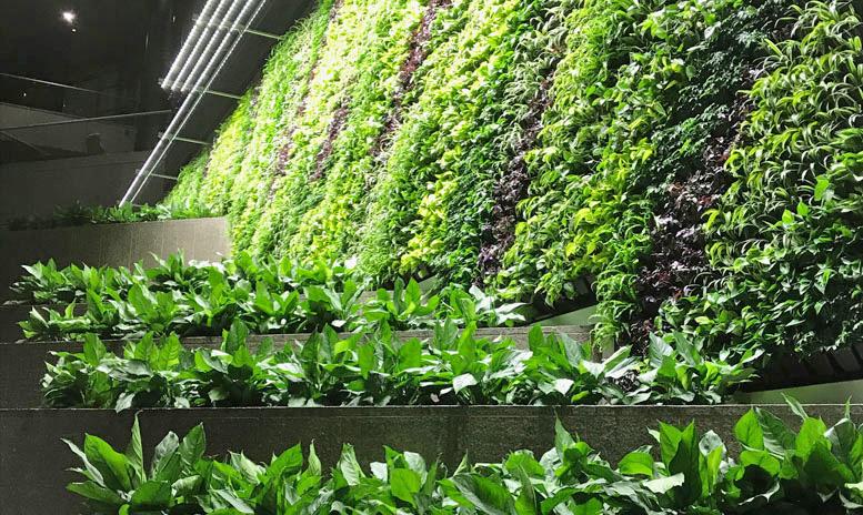 3 Story Green Wall in Arlington, VA