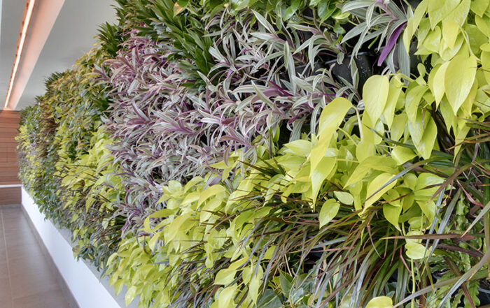AgroSci Living Wall at Rock Spa