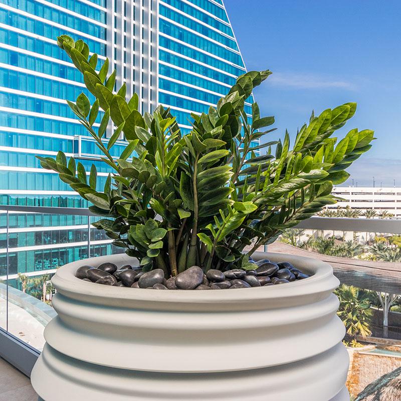 AgroSci Plantscape at luxury suite, Seminole Hard Rock Hotel & Casino