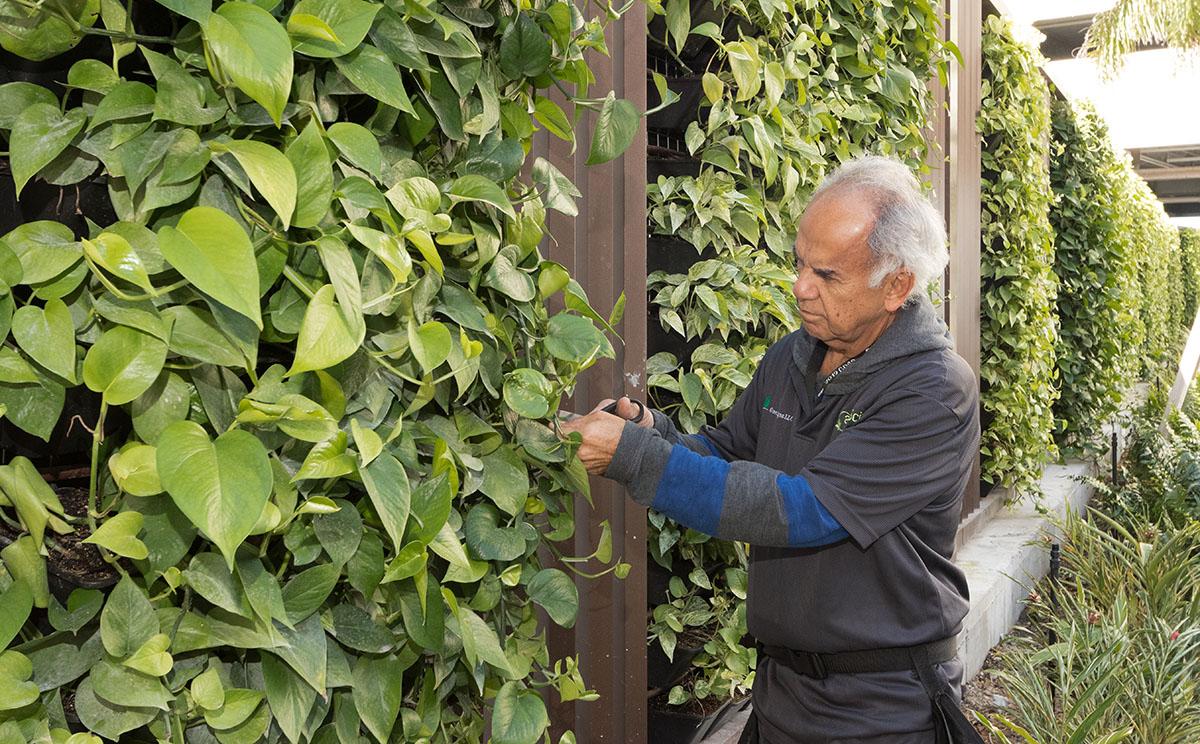 AgroSci Green Wall Service