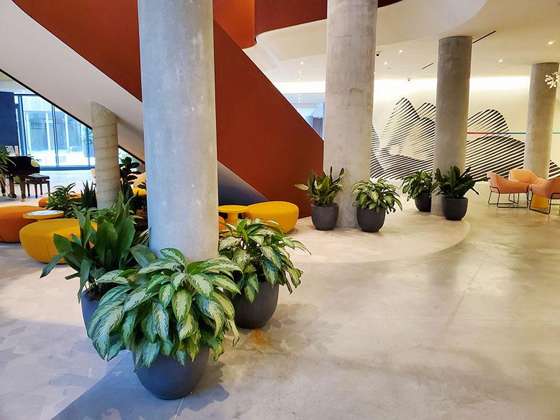 AgroSci Interior Plantscape