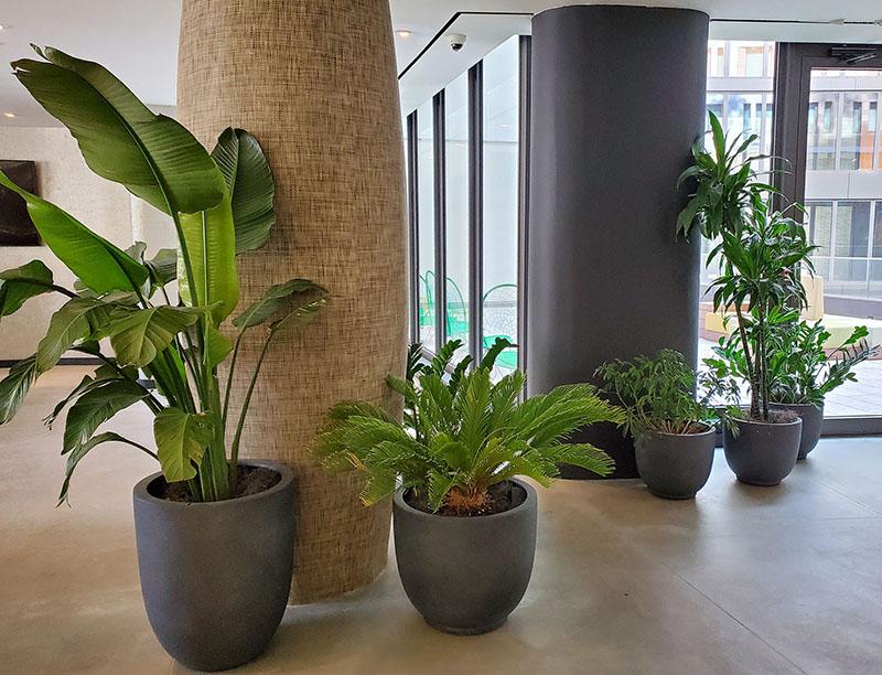 AgroSci Interior Plantscapes