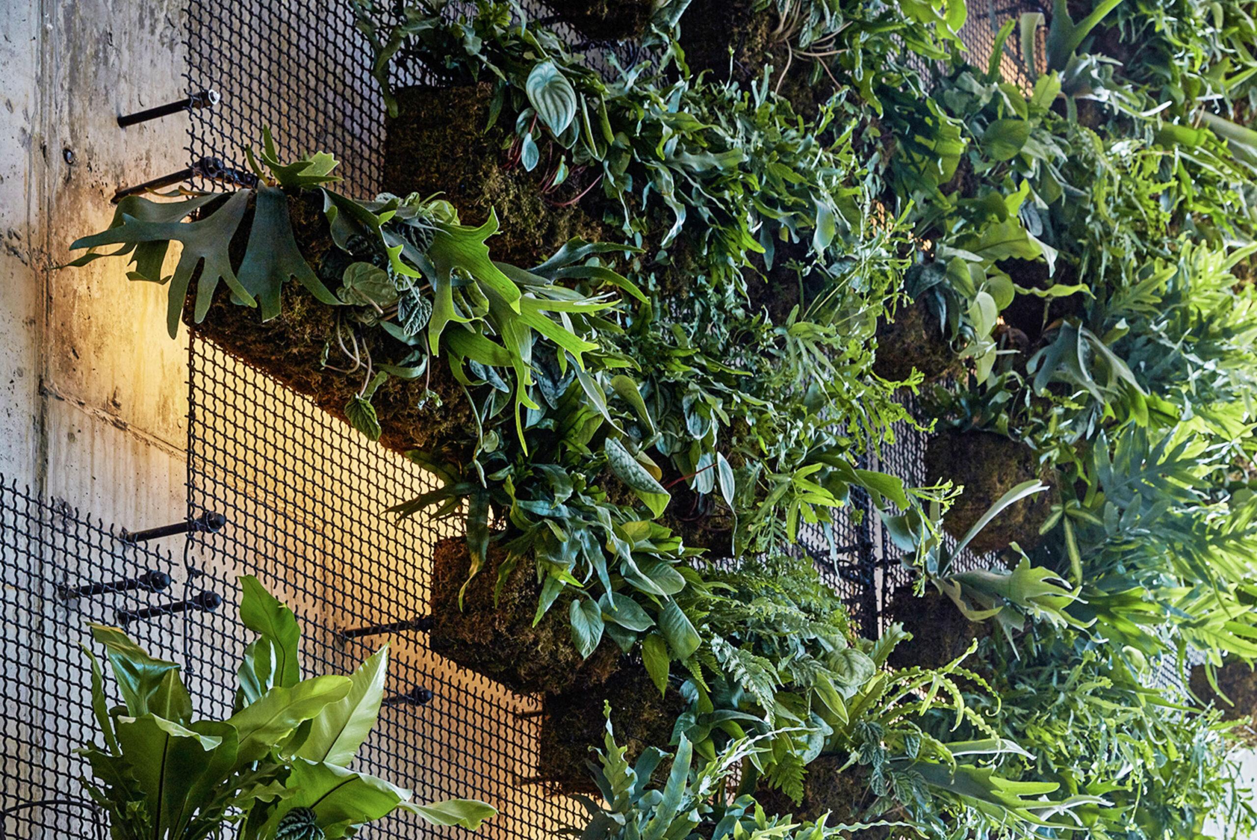 AgroSci Green Wall at 1 Hotel, Brooklyn, NYC