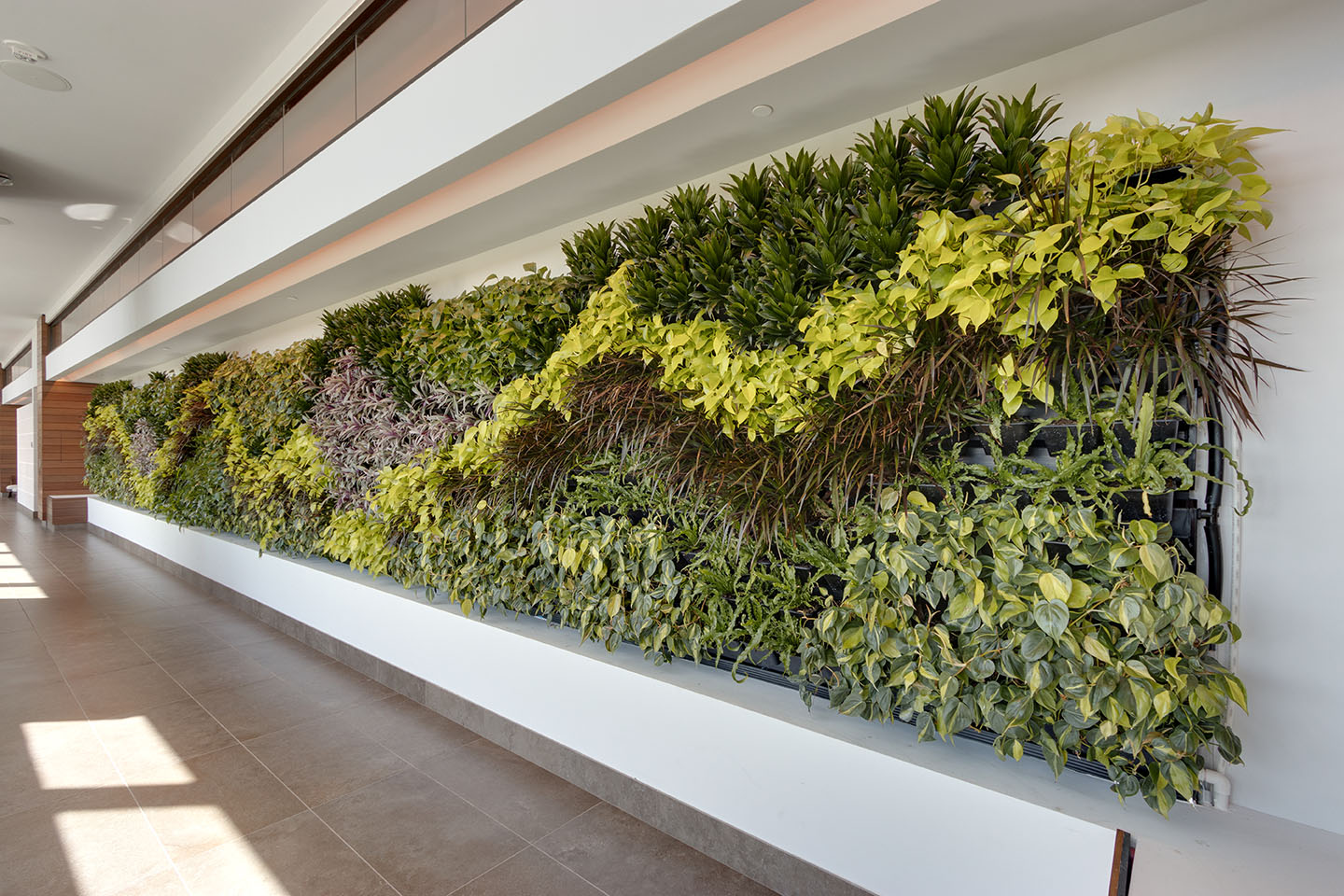 AgroSci Green wall in hallway at The Rock Spa