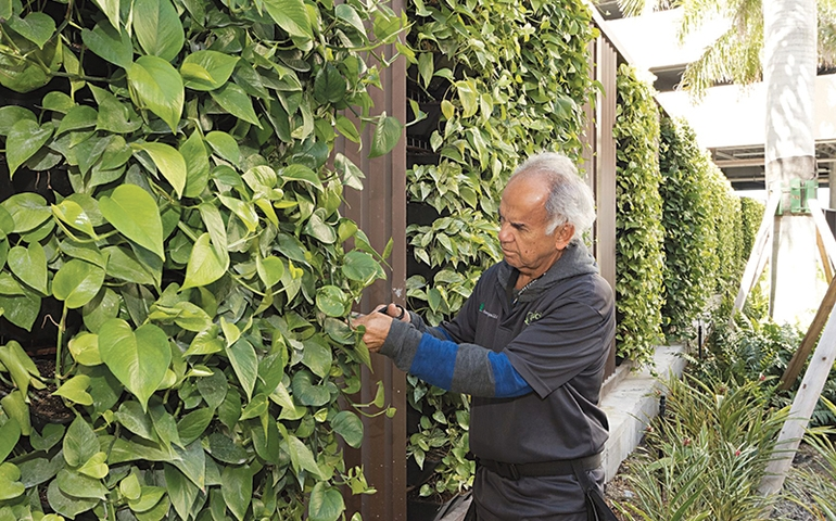 Plant Guys Truglio and Pianta Find Money Grows on Leaves