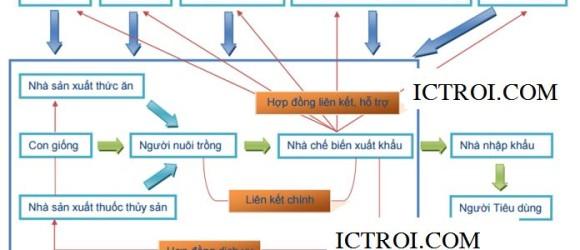 Mối liên kết dọc giữa các chủ thể trong ngành thủy sản