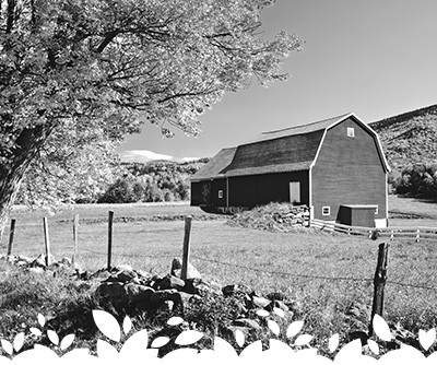 Lēf Farms is a local New England grower of fresh salad greens