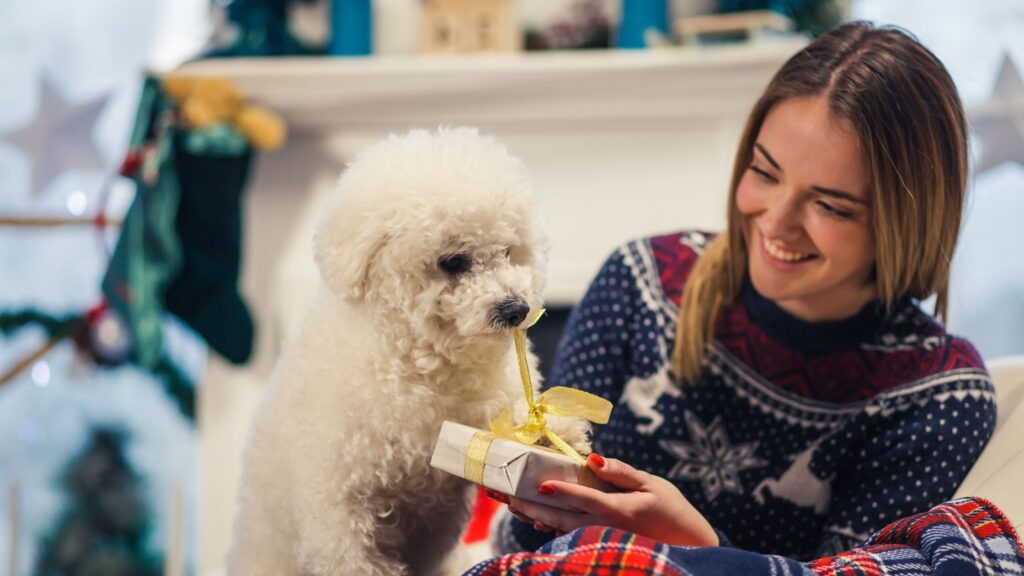 girl giving a gift to a white fluffy dog