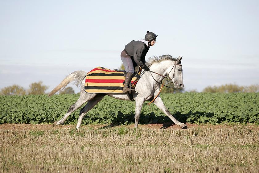 Delishess Arabian Horse