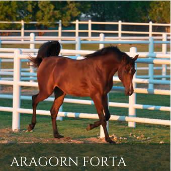 AragornFortaProgeny