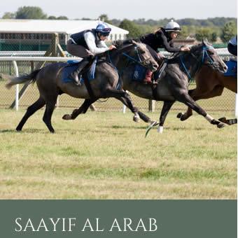 SaayifAlArabProgeny