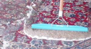 rug shampooing companies