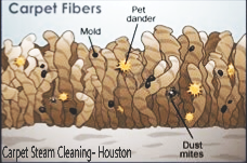 Steam cleaning kills and cleans any unwanted particles
