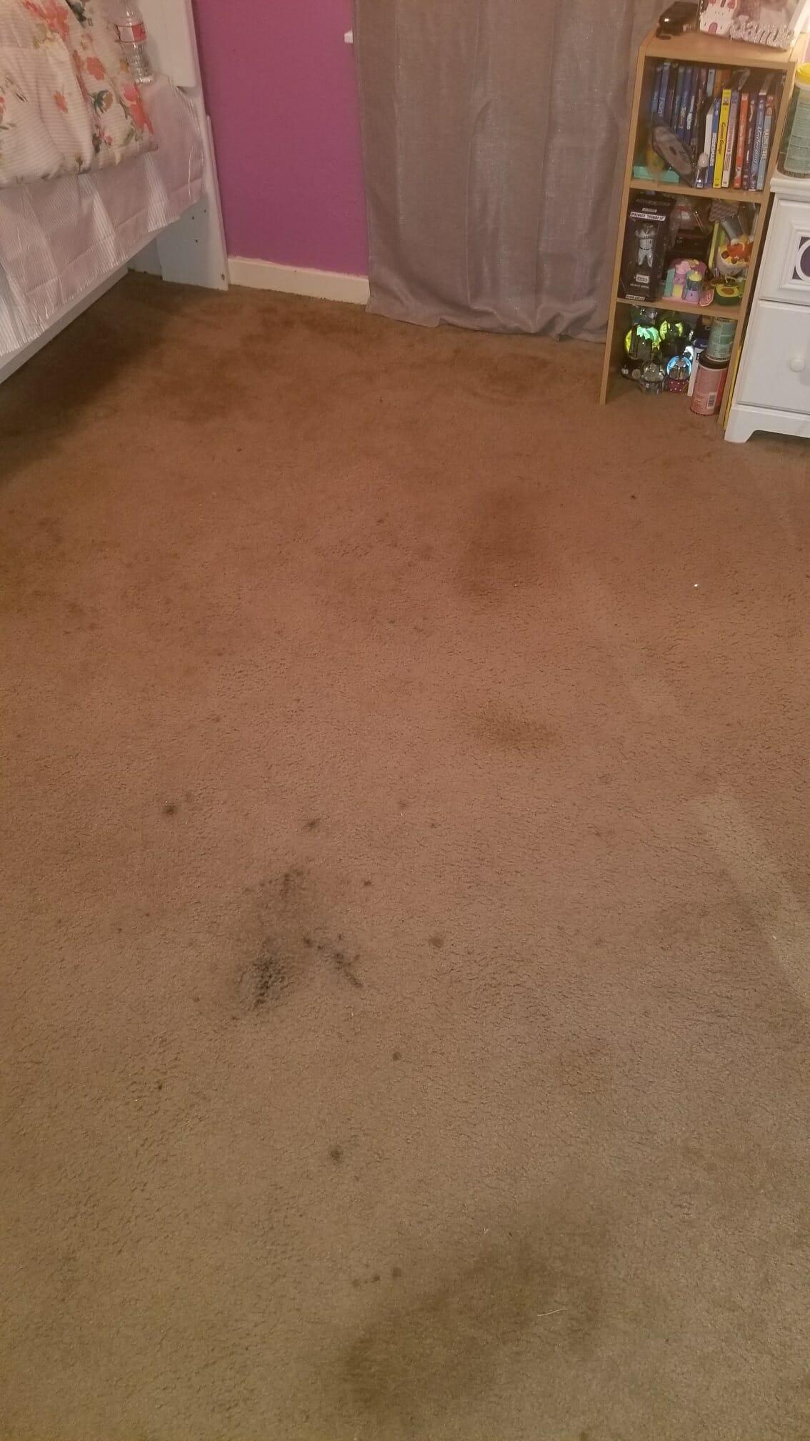 League City Carpet Cleaner