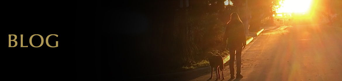 Blog. Banner photo shows rear view of Laura Meddens and her guid dog Nugget as silhouettes walking toward a colorful sunset on a tree-lined street.