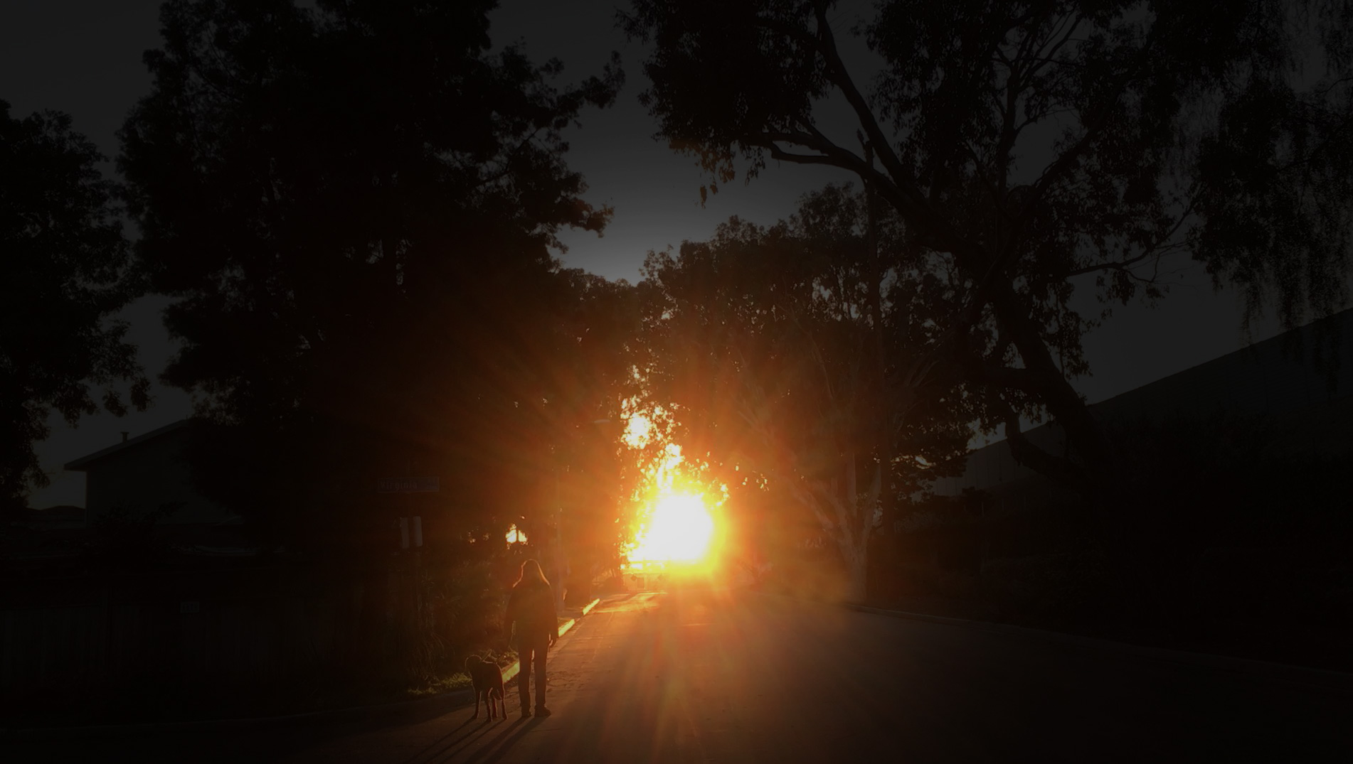 Photo of Laura Meddens and her Seeing Eye guide dog Nugget walking into the sunset.