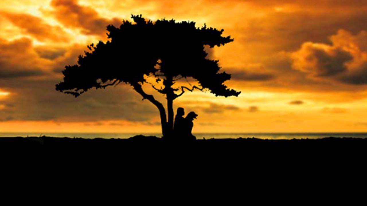 Archive-Banner. Photo imagoes Laura Meddens and her Seeing Eye Guide Dog Wagner sitting under a Divi Divi tree at sunset near the ocean on Curaçao.