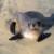 Profile picture of Jonny Steel
