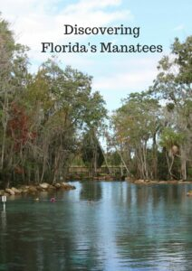 Cover of Discover Manatees Blog- Taken at Three Sister's spring