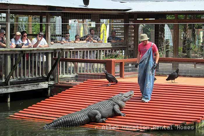 Gator Jumparoo Show