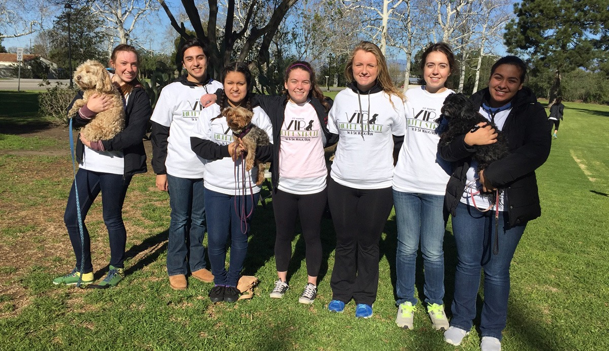 Dog Training Volunteer