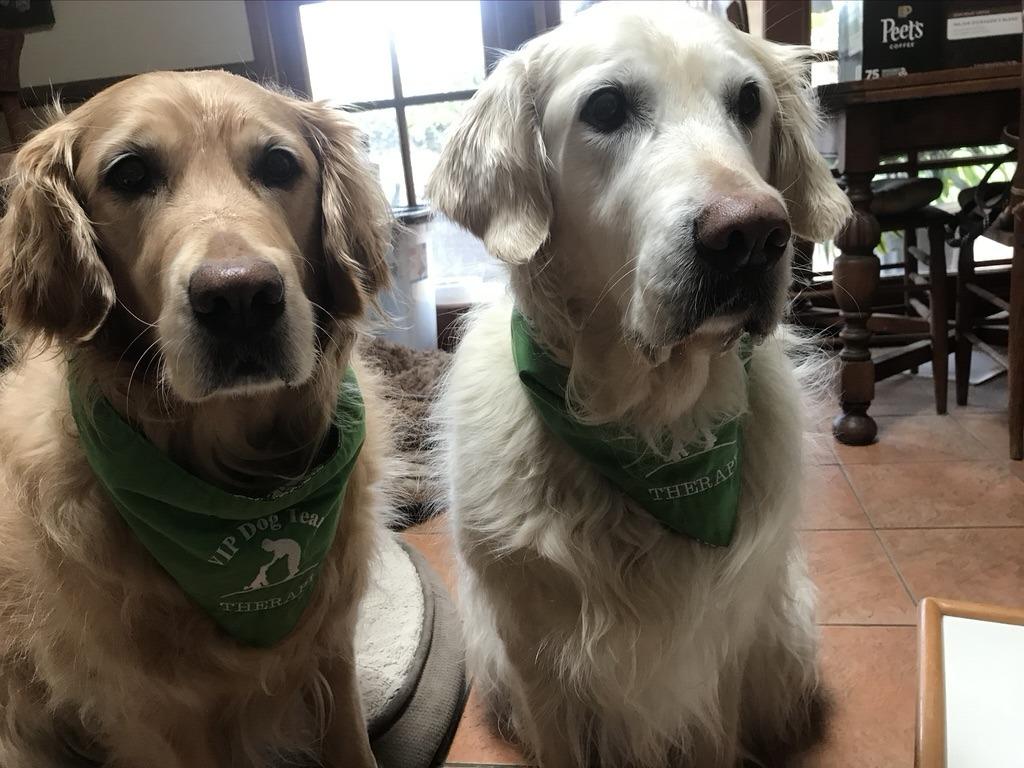 Virtual Dog Therapy