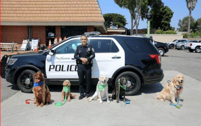 dogs with police officer