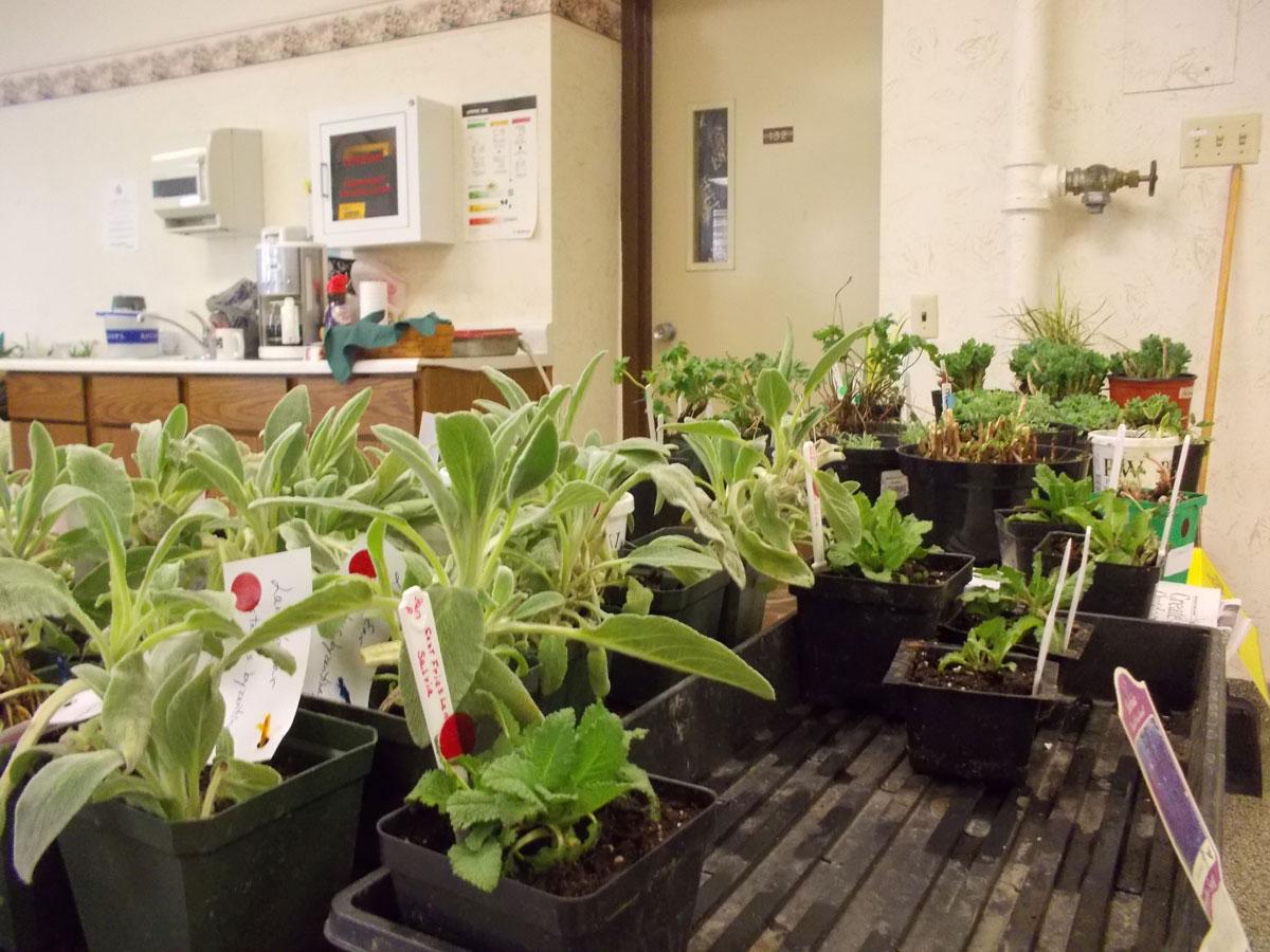 Successful Plant Sale 2013