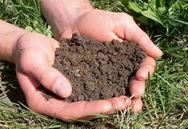 Testing Your Soil