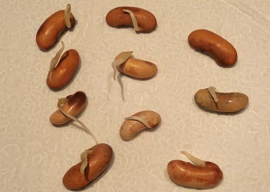 Got Seeds?