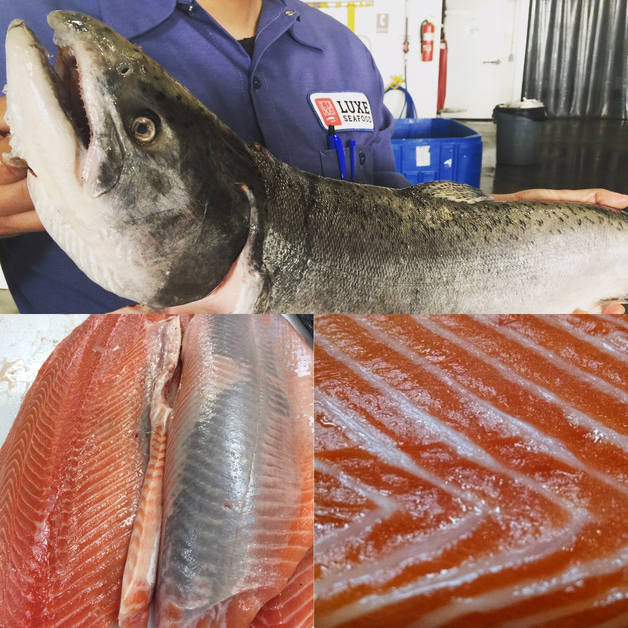 West Coast King Salmon