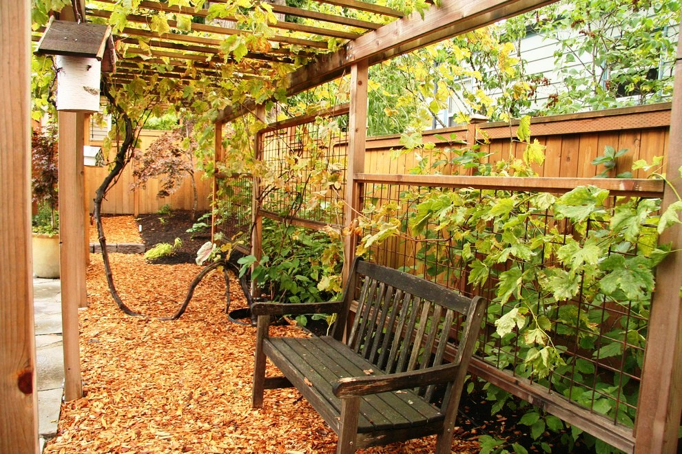 grape-trellis-design-Landscape-Traditional-with-arbor-backyard-bench-birdhouse