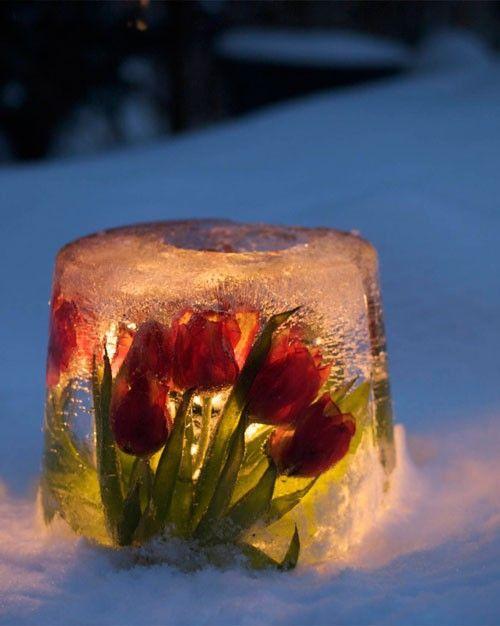 ice latern ideas