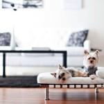 15 Stunning Pet Beds Ideas