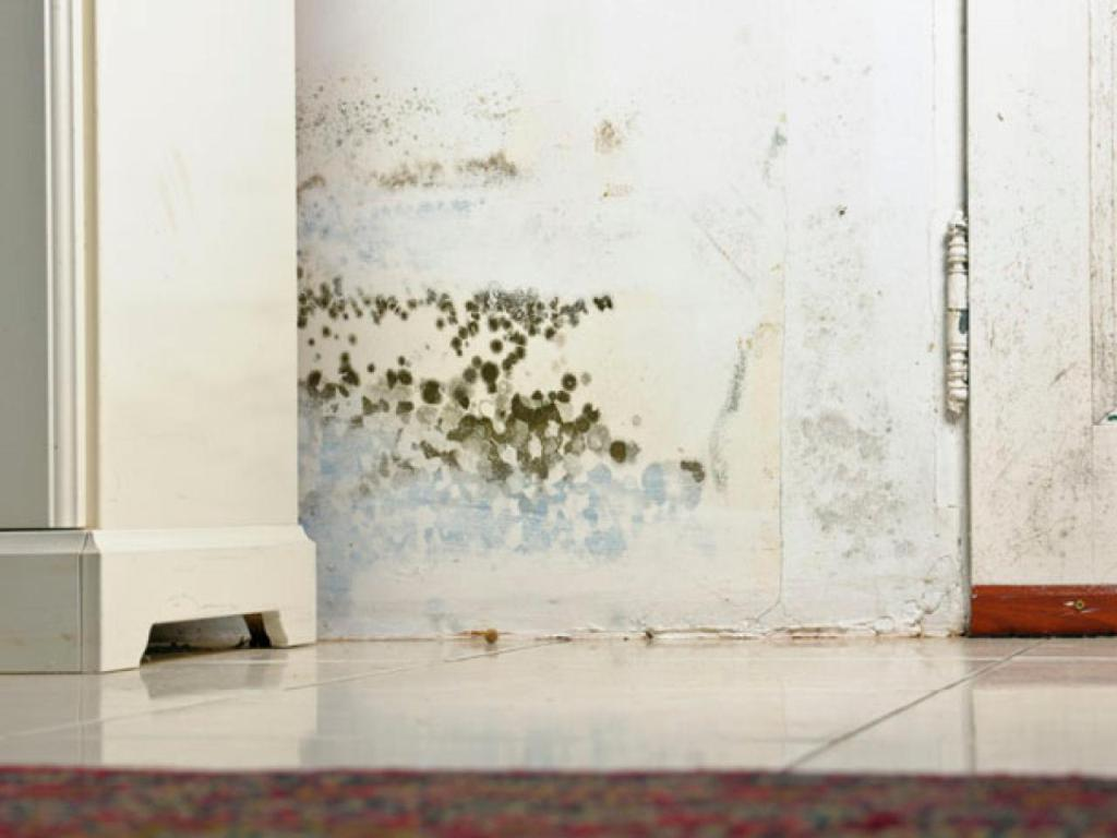 Rotting, Warping, Mould, and Mildew