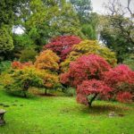 Make Your Tree More Beautiful by Slowing Its Growth
