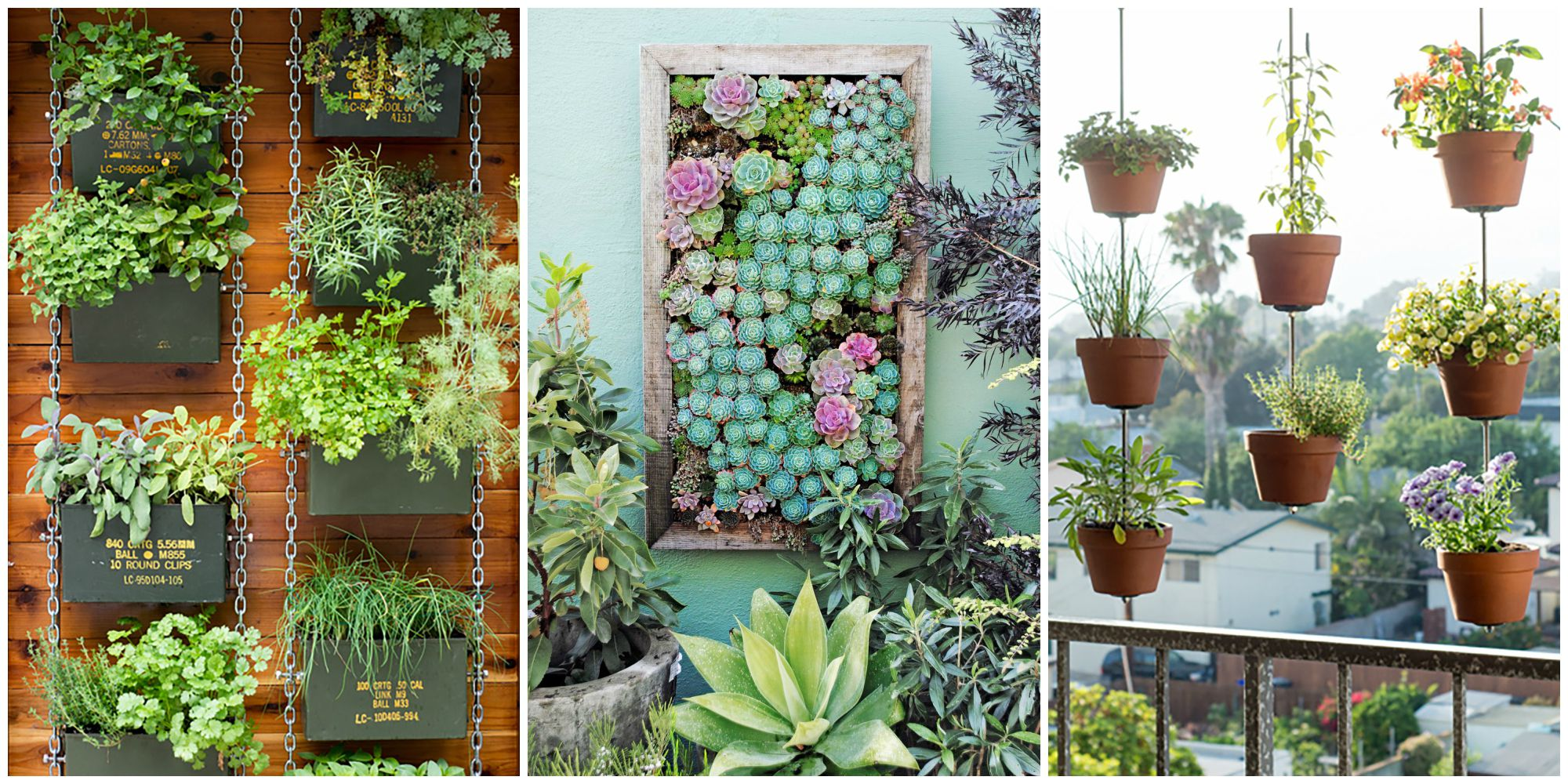 What Plants Can You Chose