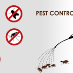 5 Natural Pest Control Remedies That Actually Work