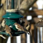 How Can I Vary The Birds Who Visit My Garden?