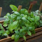 Reasons Why Everyone Should Grow Herbs