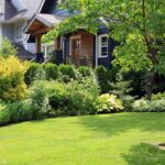 9 Front Yard Trees That'll Make Your Home a Sight for Sore Eyes