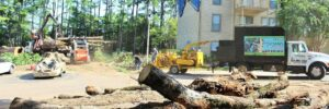 Understanding the Reasons to Hire Professional Tree Services Providers