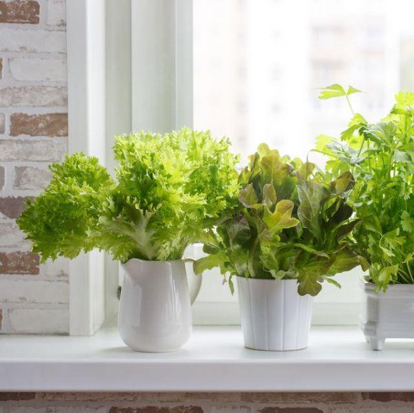 Indoors Potted Garden